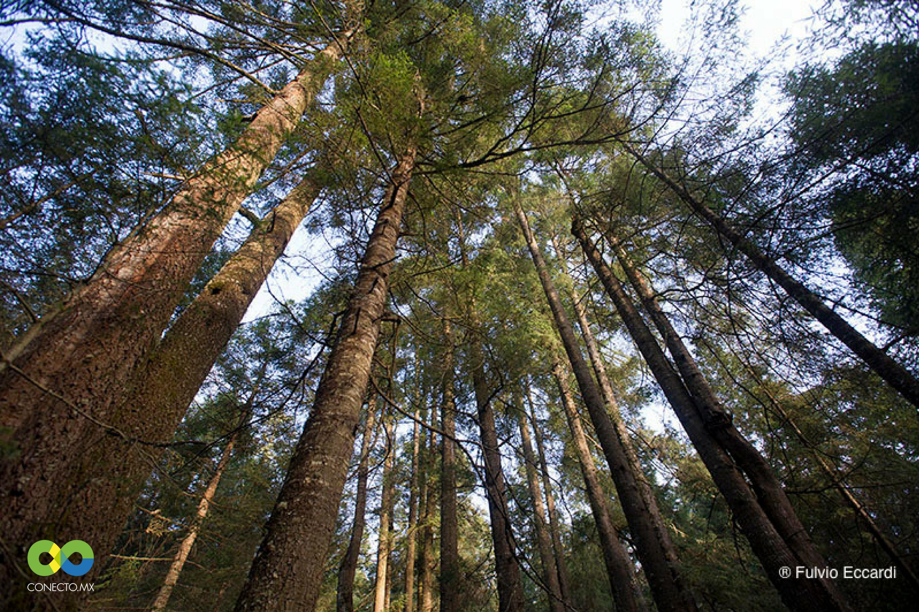 Bosque en michoacan